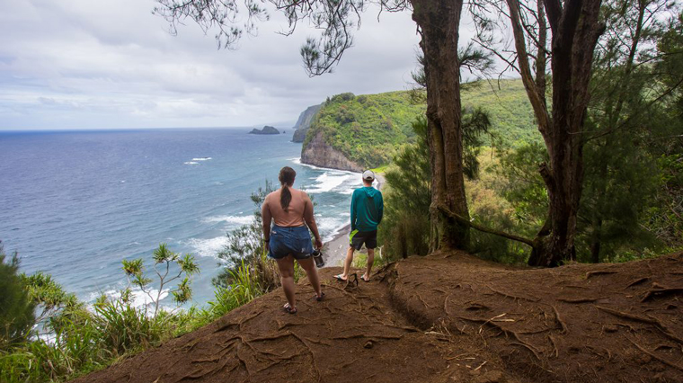 Students, professor conduct entomology research in Hawai'i