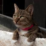 Langzhong Cat