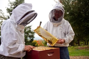 Tessa Gerberich (left) and Professor Kenton Derstine tend to one of the bee hives. (Photo by Jon Styer)