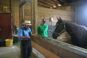 Amish racehorse buyer in stable