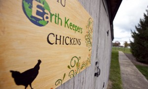 Earthkeepers_Chickens_web