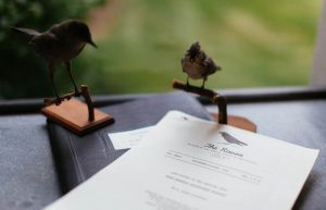 D. Ralph Hostetter's dissertation on the Carolina Junco, adapted for the bulletin of the Virginia Society of Ornithology, was found at Eastern Mennonite University. For the record, we do know the specimens looking on in the photo above are a catbird, at left, and a tufted titmouse. (Photo by Joaquin Sosa)