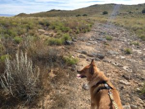 John Henry on the Volcanoes Trail, west of Albuquerque. (Photo by Russell James Pyle)
