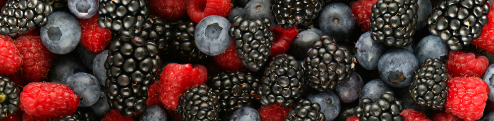 Organic Berry Conference at Eastern Mennonite University